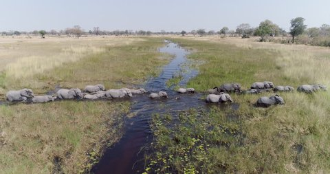 Aerial view of a breeding herd of elephants crossing a river in the Okavango Delta, Botswana