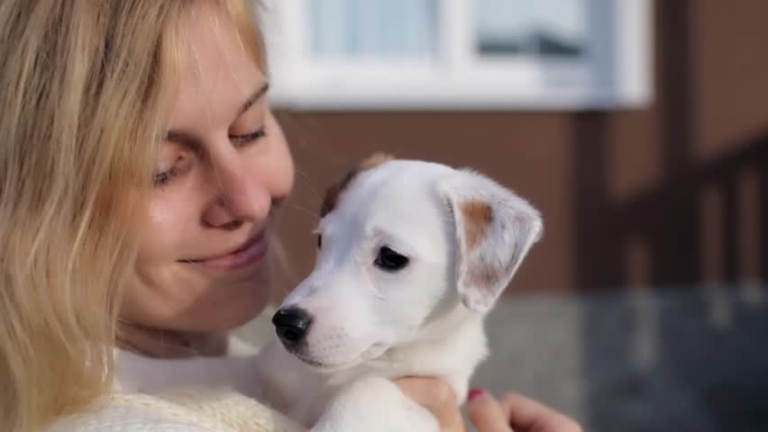 Beautiful Girl With Puppy Jack Russell Terrier at Home