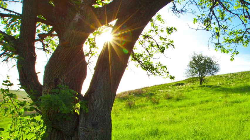 Summer landscape | Shutterstock HD Video #3260875