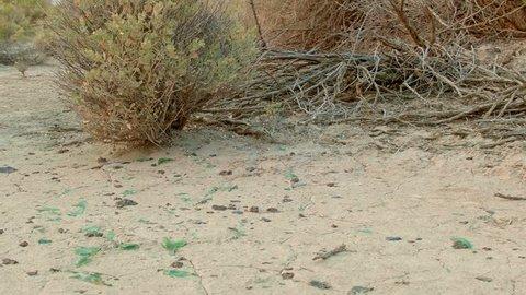 Broken arrowhead obsidian flakes and glass ancient and modern desert Roadside trash Oregon