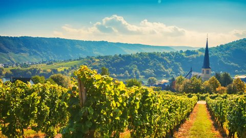 Panoramic landscape with autumn vineyards. Eifel, Germany. Nature background, Full HD, 1080p