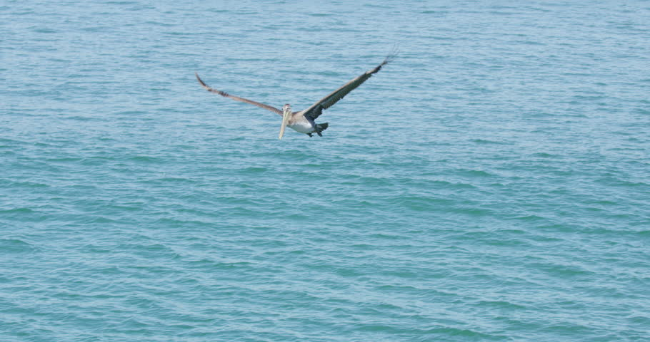 Slow motion of Pelican bird diving to hunt for fish at Seal Beach with ships in the background, California