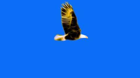 golden yellow Neon bald Eagle fly cartoon seamless loop animation isolated on chroma key blue green screen background - new quality unique handmade dynamic joyful colorful video animal bird footage