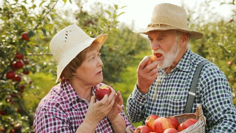 Portrait of old happy couple of farmers biting and eating apples from their harvest. Man holding a basket with many apples. Sunny day in green garden. Outdoors. Close up.