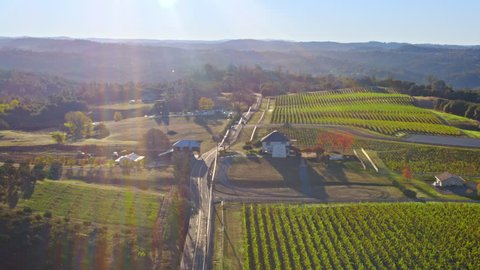 4k stunning Aerial of vineyards and fall trees in Northern California in autumn, early in the day. Rows of Grapes. Stock footage.