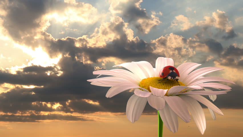 Grassy hill with chamomile and ladybird against the background of time-lapse heaven, beautiful 3d animation | Shutterstock HD Video #3323513