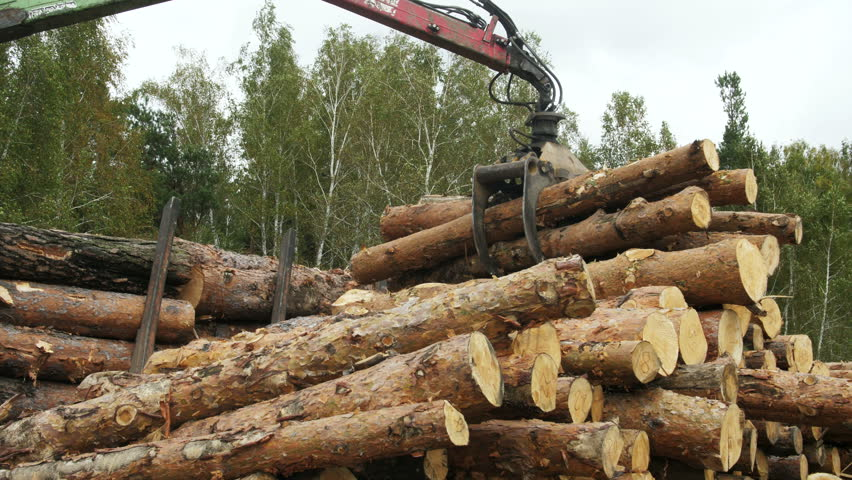 Lumberjack with modern harvester working in a forest. Wood as a source renewable energy