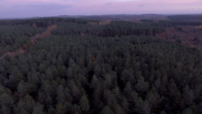Arial Footage of Pine Tree Sherwood Forest Nottingham on Winter Morning