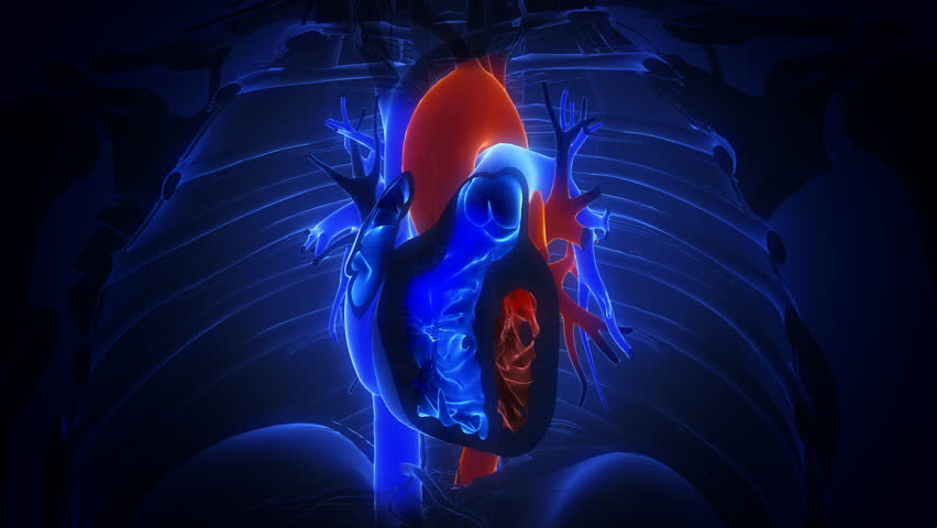 heart with blood action close up animation
