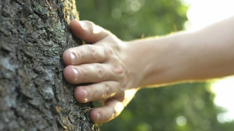 Close up of male hand gently touching a tree trunk at sunrise. Concept of nature and forest protection, environment and ecology care. Lens flare.