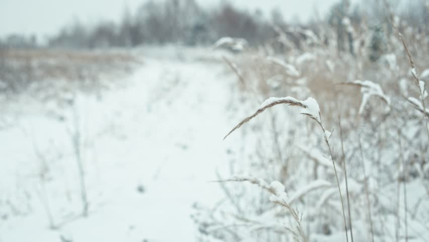 Winter landscape in details. Composition of herbs covered with snow. Focus transition. | Shutterstock HD Video #33677305