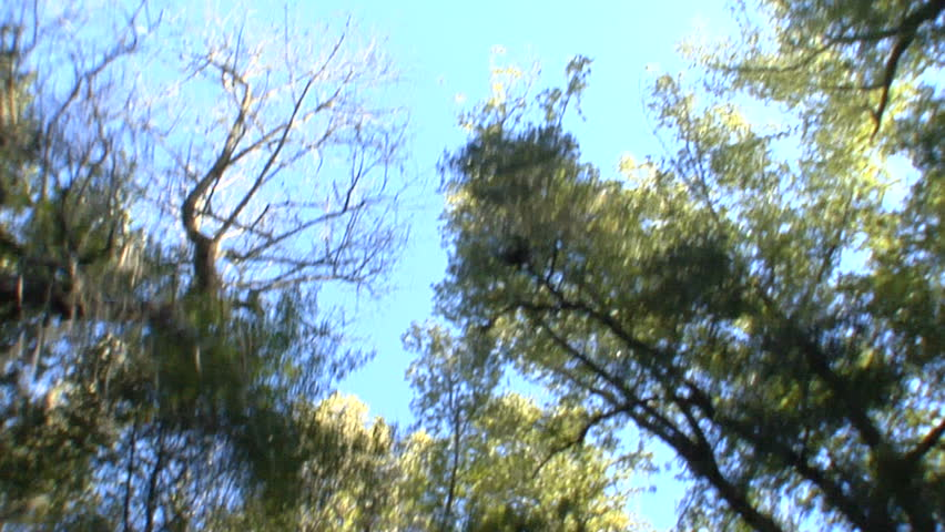This is a driving shot looking directly up at the trees. It was shot in slow motion so it has a very soft fluid feel.