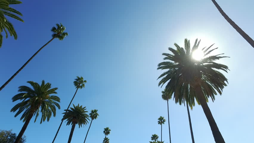 Beverly Hills street with palm trees. Sunny day. Los Angeles, California. United States. | Shutterstock HD Video #33875785