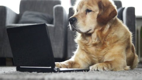 Dog is reading on a laptop