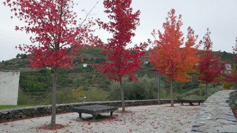 Trees with red leaves in Autumn season in Portugal
