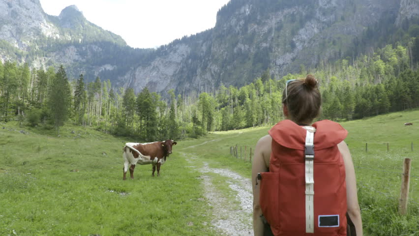 Girl is walking with the backpack through green lawn with the cows