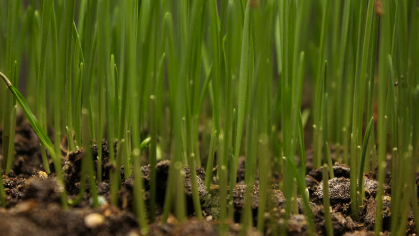 Plant growing from soil time lapse - beginning new life | Shutterstock HD Video #34367155
