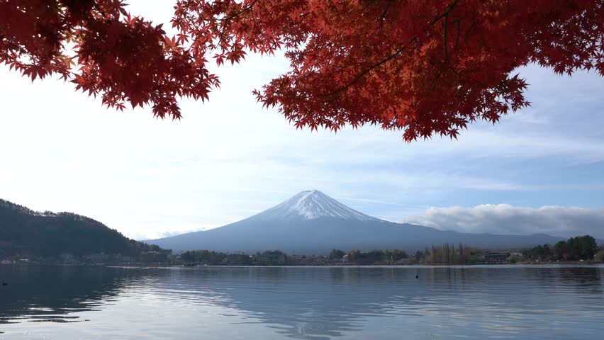 Mt. Fuji or Mount Fujiyama or Fujisan mountain view from Kawaguchi lake (Kawaguchiko) in autumn foliage with sway red Japanese maple leaves as foreground, Fujikawaguchiko, Yamanashi, Japan. | Shutterstock HD Video #34430665