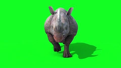 Rhinoceros Runcycle Front Green Screen Loop 3D Renderings Animations Animals