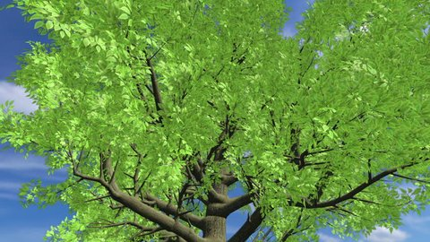 Growing Tree on a Hill (HQ 1080p 3D Animation)