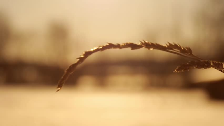 Grass bookeh effect