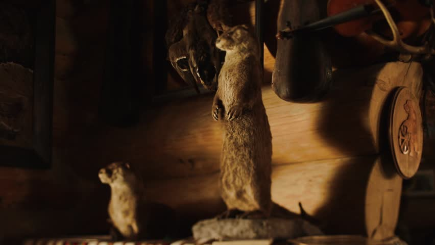The interior of the wooden cabin decorated with strange picture and taxidermy figures of wild animals such as otter.