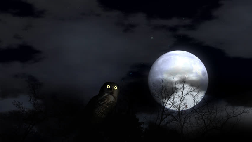 Owl Watching In Moon Light Wise Looking Owl Turning Head And ...