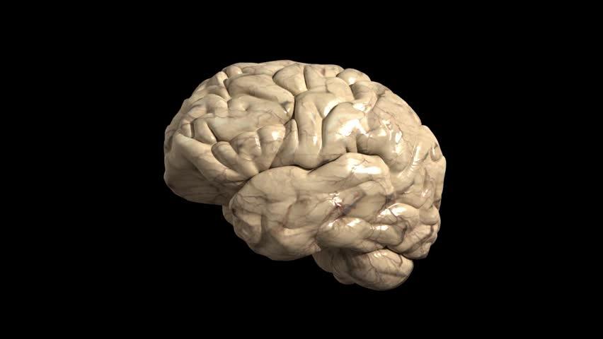 textured 3d human brain on stock footage video  100