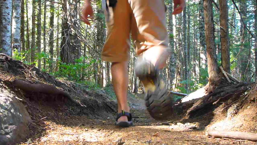 Man hiking away, down trail through thick forest in the Pacific Northwest, Oregon. #3648455