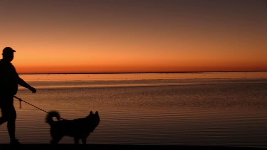 Two men walking the dog at sunset | Shutterstock HD Video #3684533
