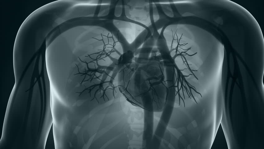 Human Xray Heart Anatomy In Stock Footage Video 100 Royalty Free