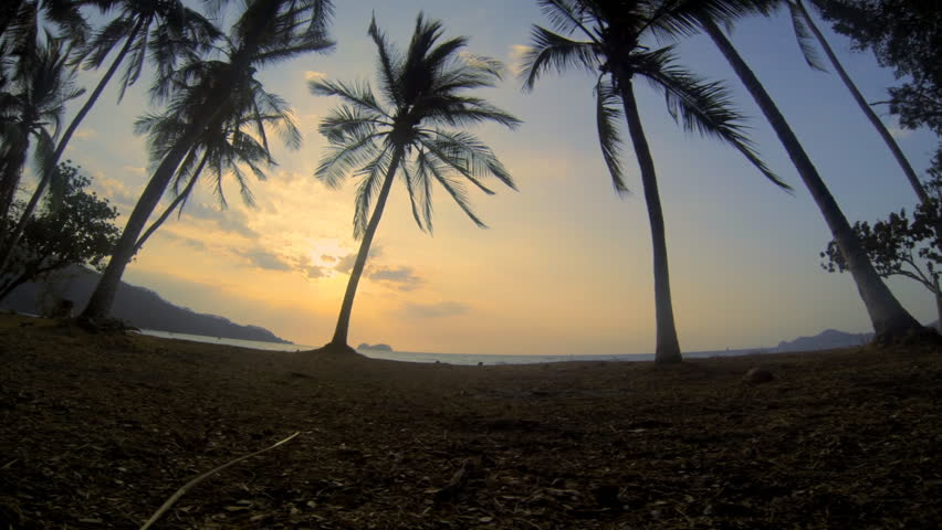Costa Rica Palms Hermosa. Wide angle looking through palm trees out to the Pacific Ocean late afternoon from Hermosa Beach, Costa Rica.