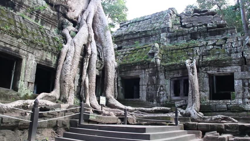 Slow pan wide shot settling on classic iconic giant tree and roots growing through Angkorian temple at Ta Prom temple complex near Angkor wat