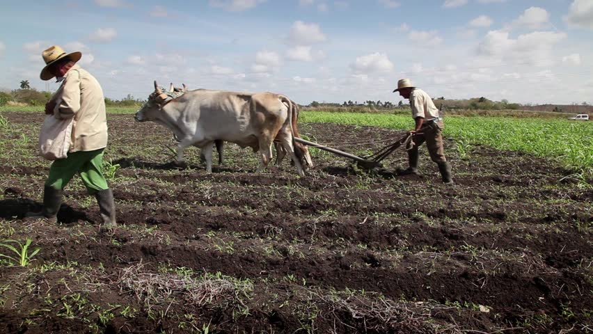 GUINES, CUBA - CIRCA APRIL 2013: Beginning of the growing season, farmers at work in farm tilling the soil and planting seeds, circa April 2013 in Guines, Cuba