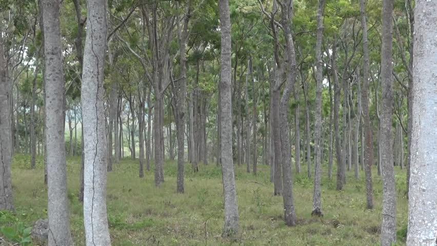 Header of African mahogany