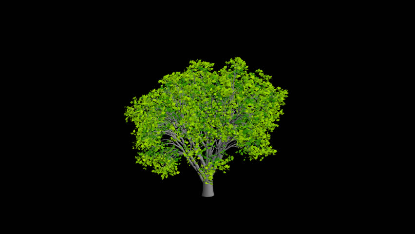 Animation tree, leaves rustling in the wind, with an alpha channel