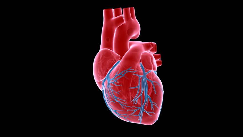 A x-ray human heart with matte | Shutterstock HD Video #388475