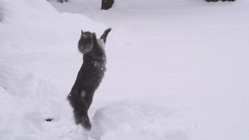 SLOW MOTION: Cat catching snowballs #3951899