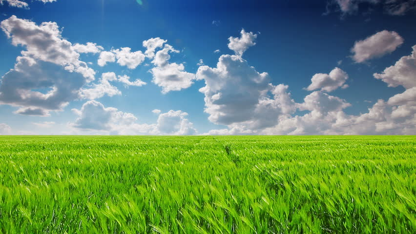 green field and cloudy sky #4023157
