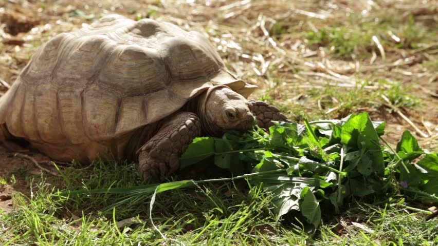 Big turtle eating #4111015