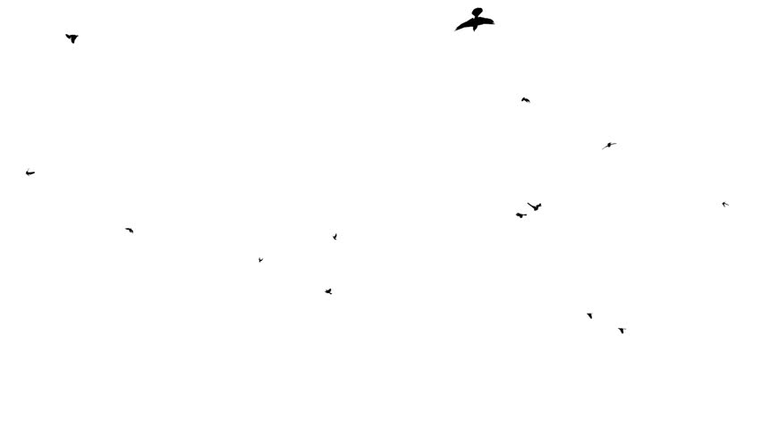 Pigeons silhouettes flying
