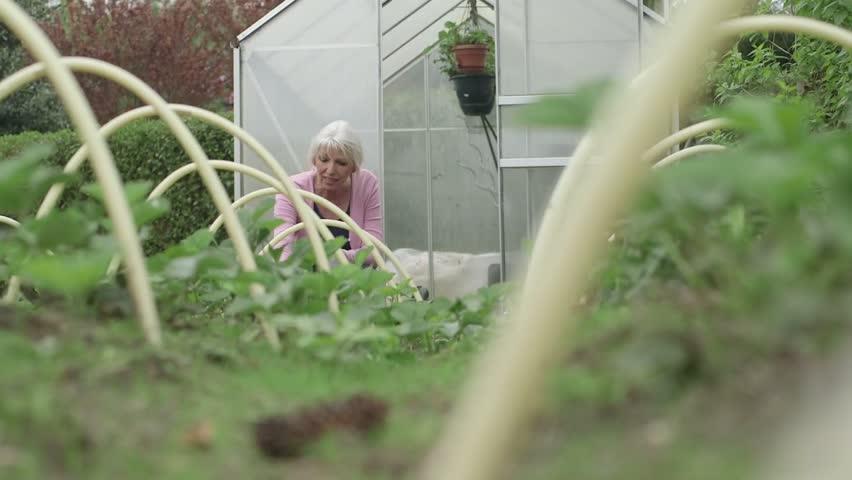 Woman working in garden outside greenhouse | Shutterstock HD Video #4212247