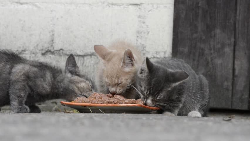 kitty litter box for travel