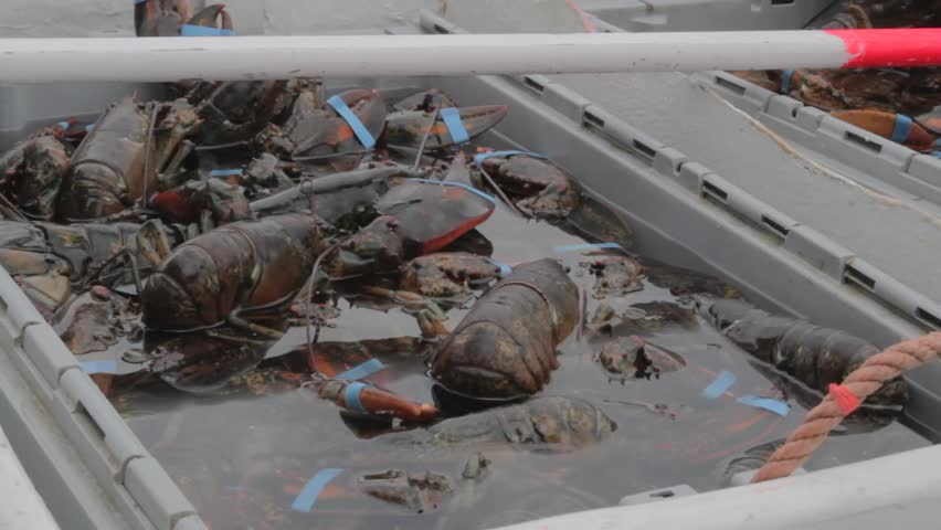 Lobster boats Footage #page 9 | Stock Clips