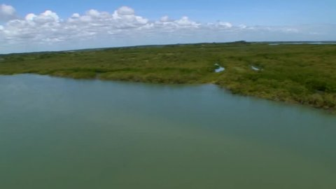 Great low level helicopter aerial footage traveling over mangrove forest in Florida.