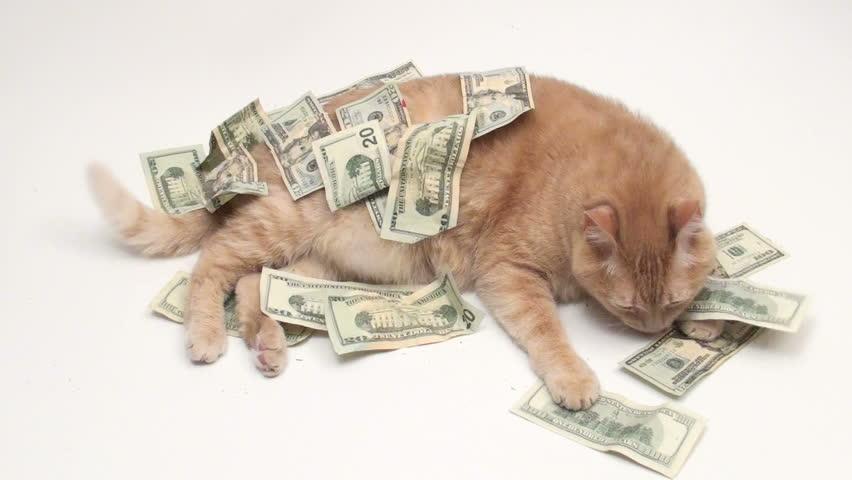 Fat cat with cash - HD | Shutterstock HD Video #431065