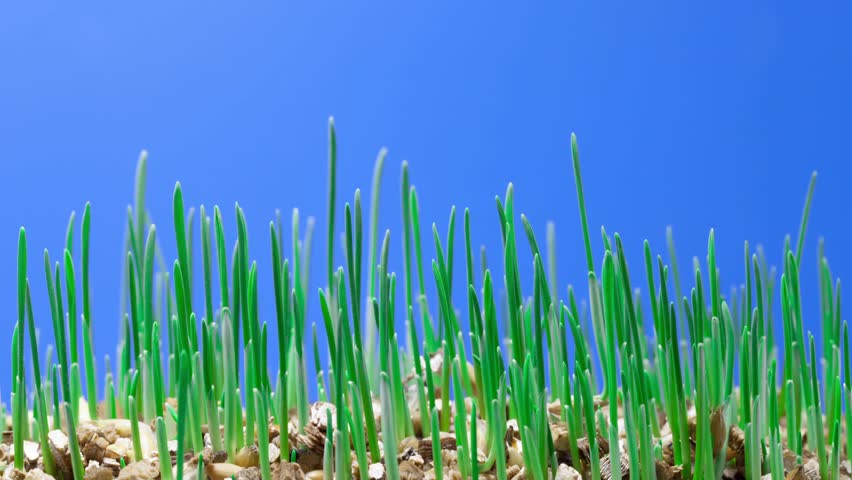 growth of green grass plants