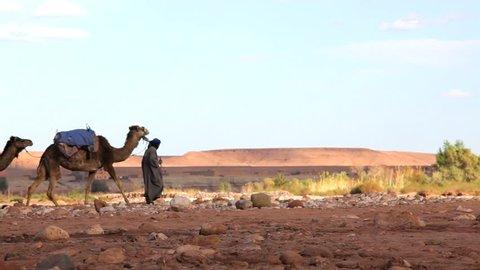 Merchant in traditional Touareg clothing leads camels through the wilderness near Ê Erg Chebbi, Sahara Desert, Morocco, Africa