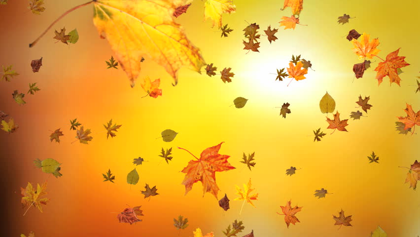 Animated Background Of Blowing Leaves Stock Footage Video