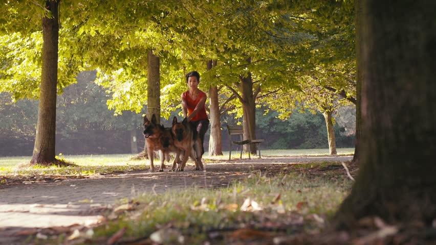 1of15 People working as dog sitter, young woman with german shepherd dogs in park. Dog walking